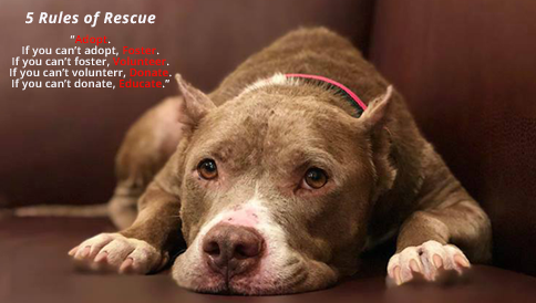 5 rules of rescue