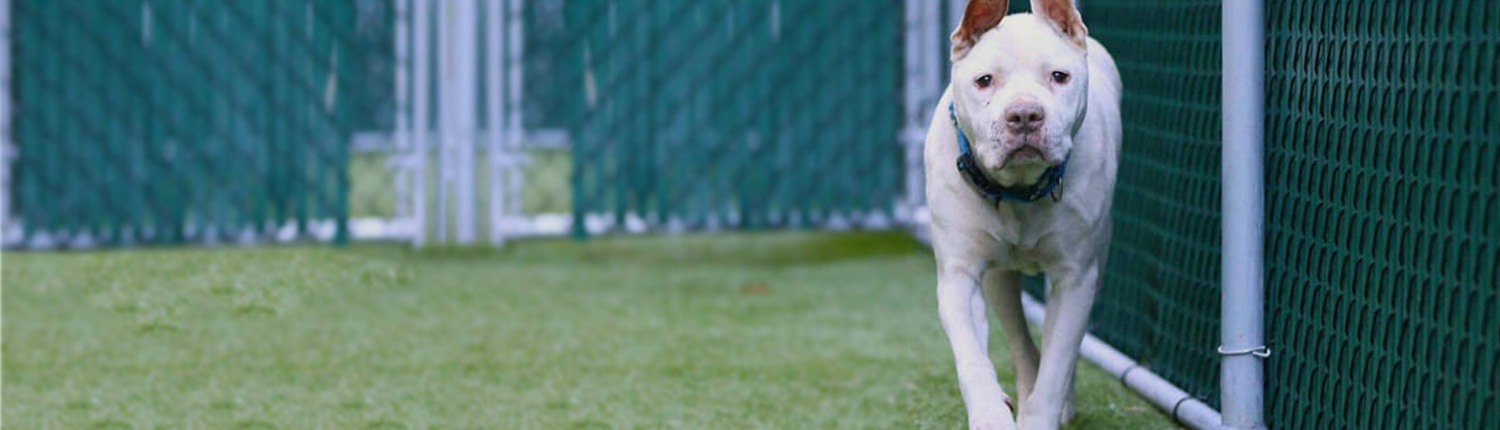 General adoption for dogs rdrnyc