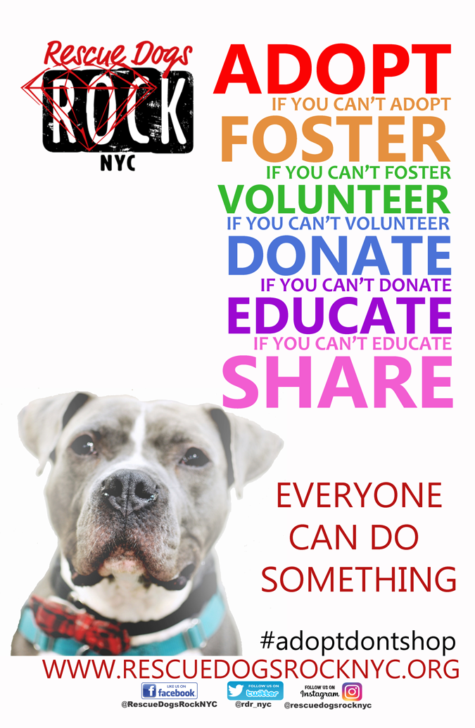 Rescue Dogs Rock mission statement page image