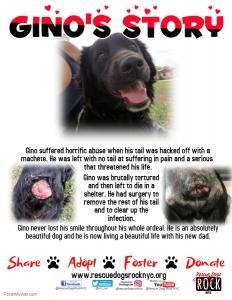 Gino's Story