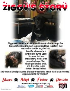 Ziggy's Story